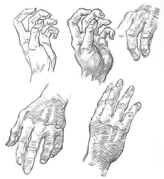 Руки строение рисунок анатомия фото